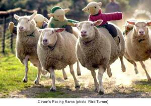 sheep_racing